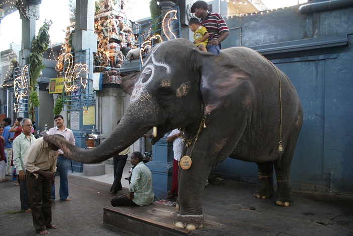 Pondicherry Manakula Vinayagar Temple elephant