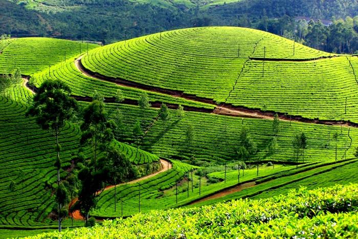 Plantations in Kerala