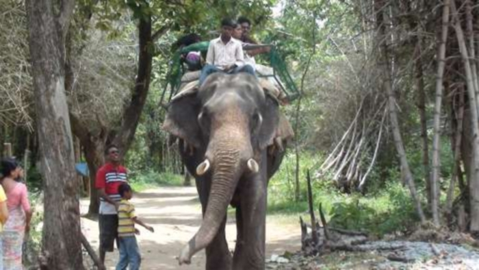 coorg12