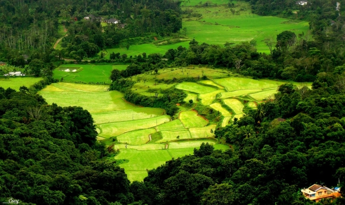 coorg7