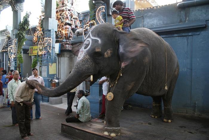 Pondicherry Manakula Vinayagar Temple elephant